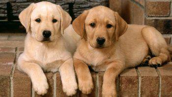 Clonación de perros y una polémica que se instala