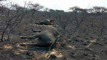 En La Pampa se estima que se quemaron más de 800 mil hectáreas.
