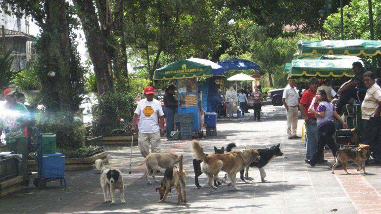 Este alimento anticonceptivo apunta a inhibir uno o dos celos por año. Los perros callejeros resultan un problema para la salud pública.