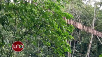 Once muertos y 14 heridos tras romperse un puente colgante
