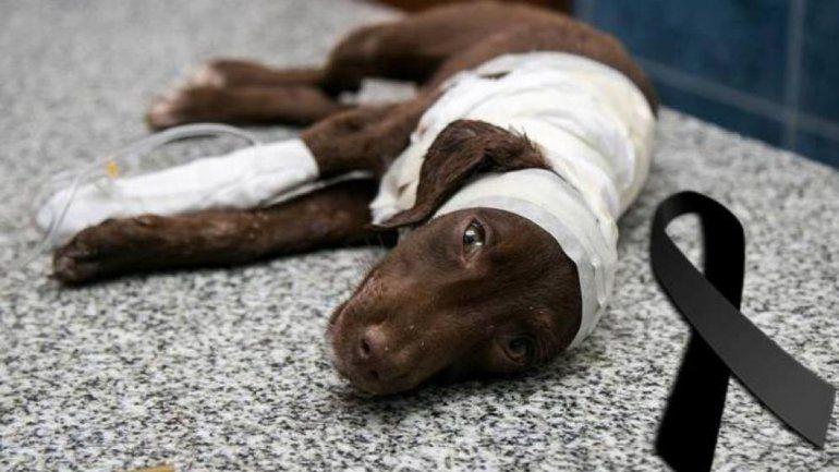 El animal fue rescatado por una vecina en San Francisco