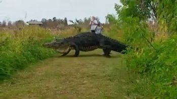turistas sorprendidos por un cocodrilo gigante en florida