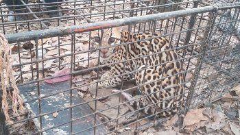 El propietario de la vivienda no pudo mostrar ningún papel con el que acreditara ser el dueño de todos esos animales ni tampoco ningún permiso oficial.