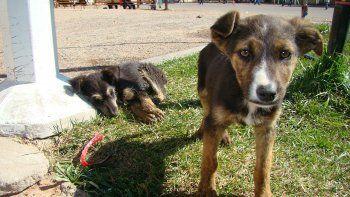 En Alta Gracia premian al que adopta perros