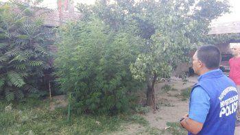 allanan una casa por una denuncia de armas y encuentran marihuana