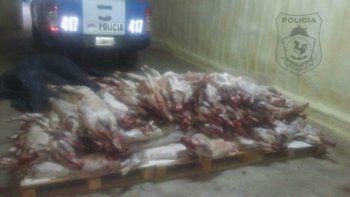 Llevaban 80 chivos faenados en una camioneta