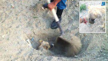 Enterraron vivo a un perro pensando que estaba muerto