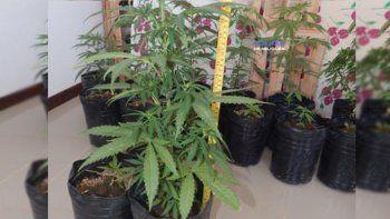 Detienen a tres médicos con 19 plantas de marihuana