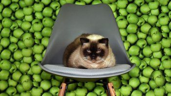 Ojo con las frutas que come tu gato