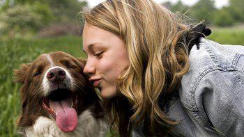 Los perros precisan del cariño y la atención de su amo, aunque sean de una raza autosuficiente.