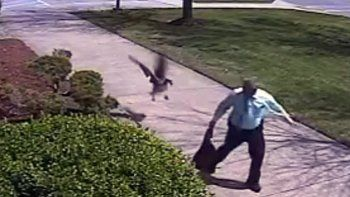 un ganso ataco a un policia que piso su territorio