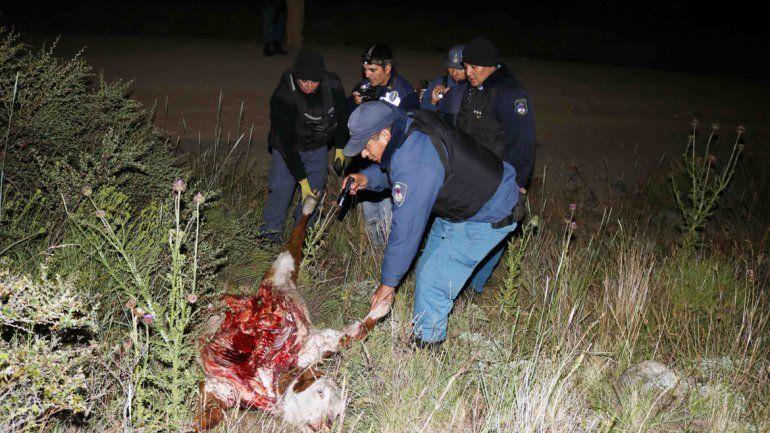 El delito de caza ilegal y cuatrerismo mantiene en vilo a los vecinos.