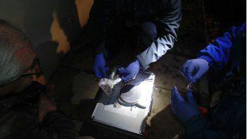 vendian la droga desde la ventana de su casa: hay tres detenidos