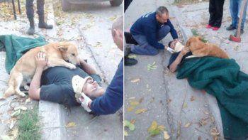 La emotiva reacción de un perro al ver a su dueño accidentado