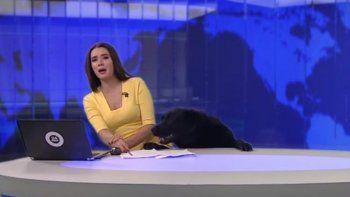 Visitante inesperado: un perro interrumpió un noticiero en vivo