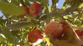 Los fruticultores podrán acceder a beneficios impositivos.