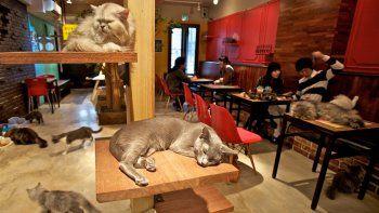 Los felinos les hacen compañía a los comensales mientras estos comen o toman un trago.