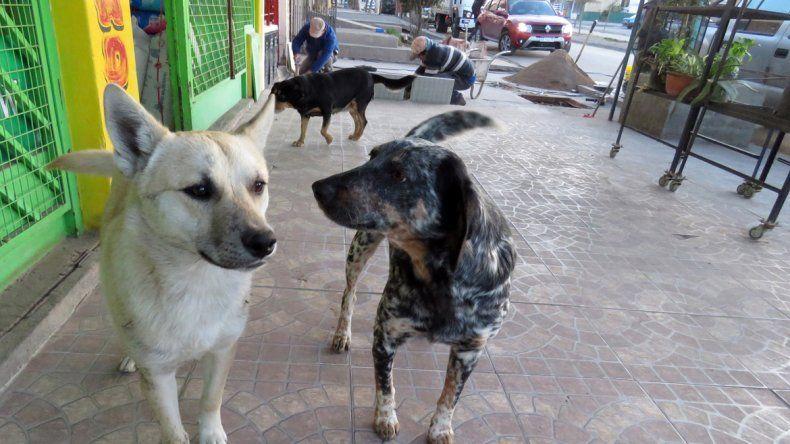 La Muni reconoció que se equivocó con las multas a quienes den de comer a perros callejeros