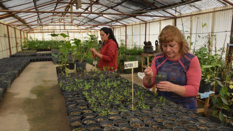 Producen 10 mil plantas por a o para la ciudad vivero for Viveros en neuquen