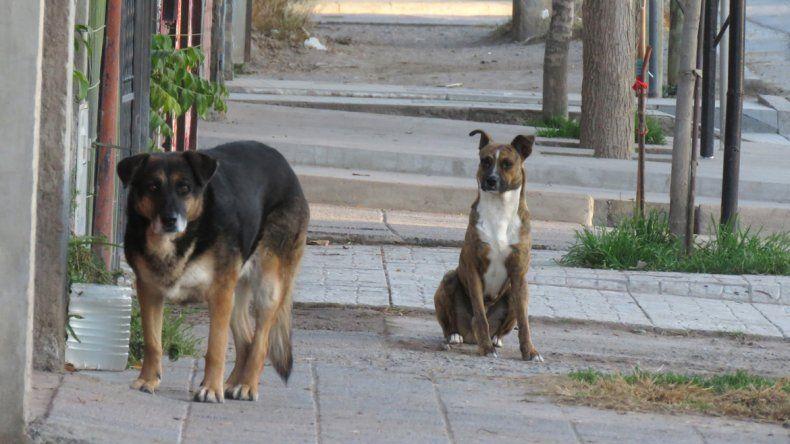 El proyecto apunta a promover la tenencia responsable de mascotas.