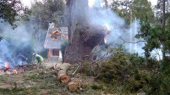 Bronca por la tala de un coihue de 500 años en Villa La Angostura