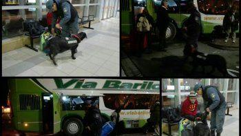 La perra Malén ha trabajado en cientos de procedimientos y es muy efectiva.