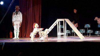multaron a circo que utilizaba perros en sus funciones