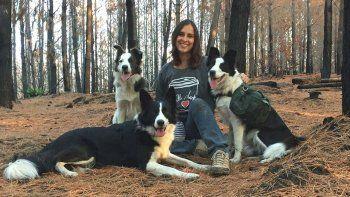 tres perras estan reforestando los bosques arrasados por los incendios