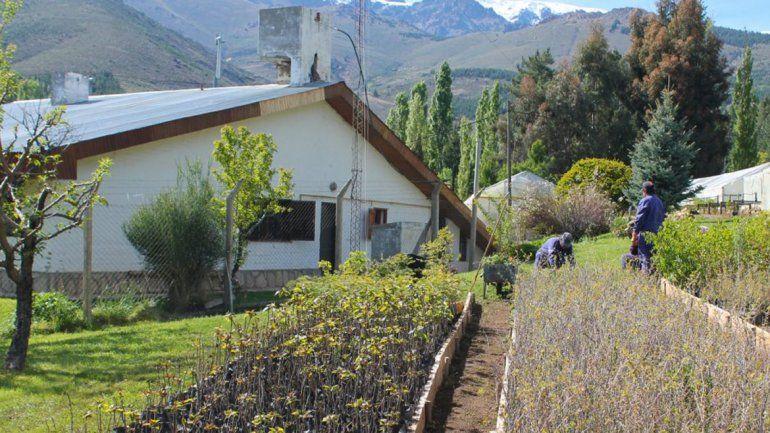 Impulsan la venta de plantas en los viveros interior for Viveros en moreno