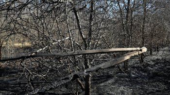 bomberos no dan abasto con los incendios de pastizales