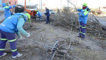 Obreros municipales juntando restos de podas con una chipeadora.