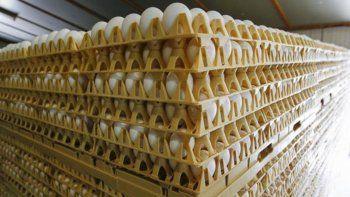 Holanda pide a sus ciudadanos que no coman huevos