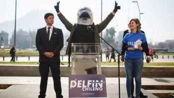 Sorpresa: un delfín se postuló para ser presidente de Chile