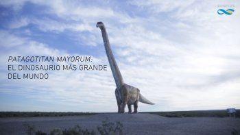 Confirman el hallazgo del dinosaurio más gigantesco de la historia en la Patagonia
