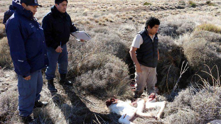 Los elementos secuestrados por la Policía rural en Junín de los Andes.