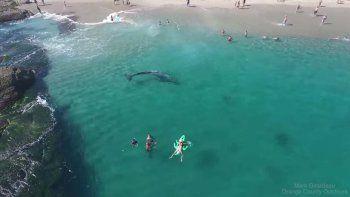 ballena sorprende a turistas en una playa de california
