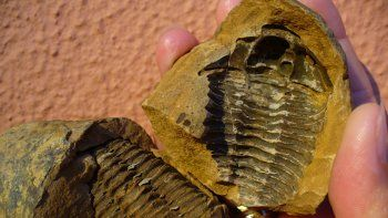 Se llegó a esta conclusión después de analizar sedimentos fosilizados encontrados en Australia.