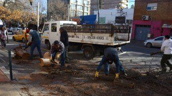 Personal del Municipio retira los restos de un árbol que cayó en el centro.