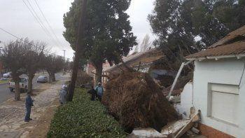 Familia se salvó al salir de su casa antes de que un árbol se derrumbe
