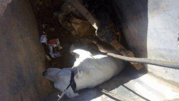 Un perro cayó en una fosa séptica y reclaman medidas de seguridad