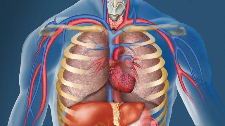 que organo tenemos al lado derecho del cuerpo