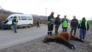 Un hombre resultó herido tras chocar contra un caballo suelto en Junín de los Andes