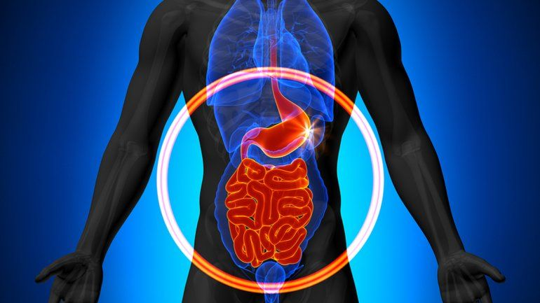 Una bacteria probiótica anularía o limitaría a la que causa la gastritis.