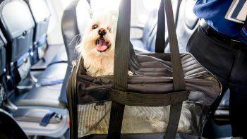 Lo que tenés que saber para viajar en avión con tu mascota. Edad, salud, condiciones y más.
