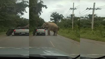 un elefante busca comida en el lugar mas insolito