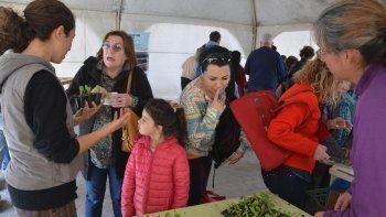 Huerteros del Proda comercializando plantines de verduras orgánicas.