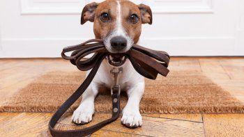 Que pasear al perro no sea un suplicio