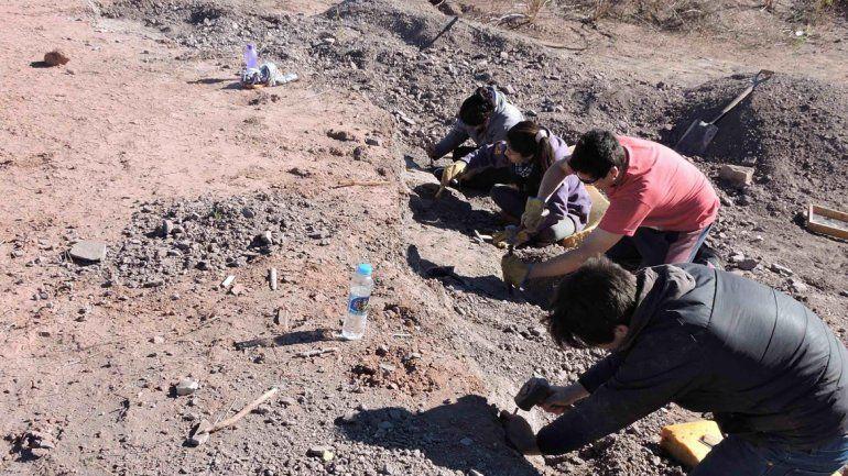 Los paleontólogos trabajan sobre el terreno para rescatar los restos.