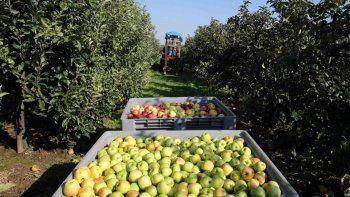 en crisis. El sector de la fruta en el Alto Valle no levanta cabeza .