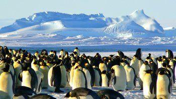 De una población de 36 mil pingüinos, este año sólo sobrevivieron dos.